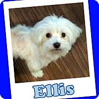 Adopt A Pet :: Ellis Franklin - Pataskala, OH