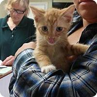 Adopt A Pet :: Cracklin - Putnam, CT