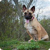 Adopt A Pet :: Kricket - Aurora, OH