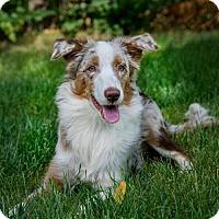 Adopt A Pet :: Sunflower - Boulder, CO