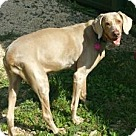 Adopt A Pet :: Izzy **In a foster home**