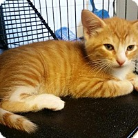 Adopt A Pet :: Foy - Freeport, NY