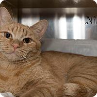 Adopt A Pet :: Nila - San Juan Capistrano, CA