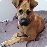 Adopt A Pet :: Olivia - Winnipeg, MB