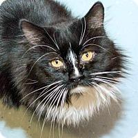 Adopt A Pet :: Tango - Prescott, AZ