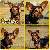 Adopt A Pet :: Bryant - New Milford, CT