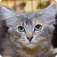 Adopt A Pet :: Hinata - Irvine, CA