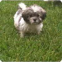 Adopt A Pet :: Caleb - Hilliard, OH
