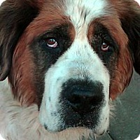 Adopt A Pet :: ROMA - Glendale, AZ