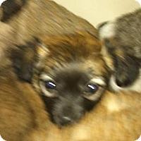 Adopt A Pet :: rosemary - pasadena, CA