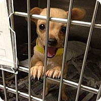 Adopt A Pet :: Daisy - Oceanside, CA