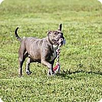 Adopt A Pet :: Layla - Pompano Beach, FL