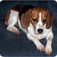 Adopt A Pet :: Parker - Novi, MI
