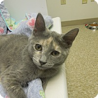 Adopt A Pet :: Stoney - Medina, OH