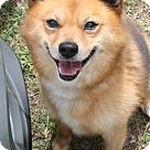 Adopt A Pet :: Westley