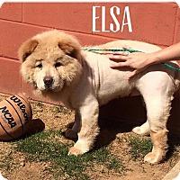 Adopt A Pet :: ELSA - Dix Hills, NY