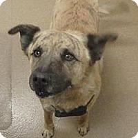Adopt A Pet :: Memphis - Las Vegas, NV