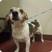 Adopt A Pet :: Jack - Wisconsin Dells, WI