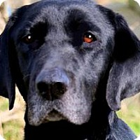 Adopt A Pet :: ELLA MAE(WHAT A STORY-PLS READ - Wakefield, RI