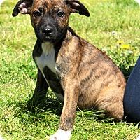 Adopt A Pet :: Aiden - Glastonbury, CT