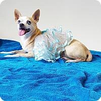 Adopt A Pet :: Sandy - Belle Chasse, LA
