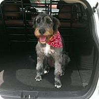 Adopt A Pet :: Sgt - Willingboro, NJ