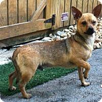 Adopt A Pet :: Junior - Concord, NC