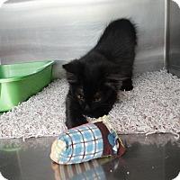 Adopt A Pet :: Bebe - Elyria, OH