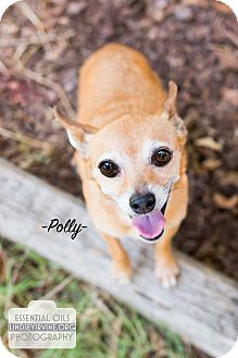 Chihuahua Mix Dog for adoption in Leander, Texas - Polly