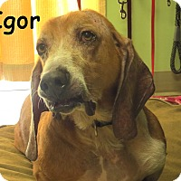 Adopt A Pet :: Igor (Iggy) - Warren, PA