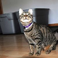 Adopt A Pet :: Dela - Marlton, NJ