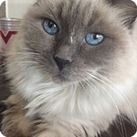 Adopt A Pet :: Adora - San Antonio, TX