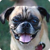Adopt A Pet :: Percy - Bedminster, NJ