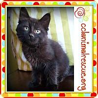 Adopt A Pet :: Blanche - Panama City, FL
