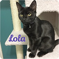 Adopt A Pet :: Lola - Arlington/Ft Worth, TX