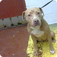 Adopt A Pet :: EPIPHANY - Atlanta, GA