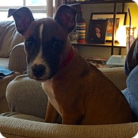 Adopt A Pet :: NICK - Fishkill, NY