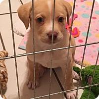 Adopt A Pet :: Eve - Savannah, GA