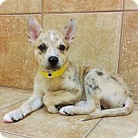 Adopt A Pet :: Jack *Petsmart GB* - Appleton, WI