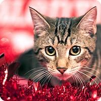 Adopt A Pet :: Theseus - Gainesville, FL