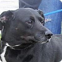 Adopt A Pet :: Cissy - Germantown, MD