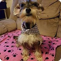 Adopt A Pet :: Lucca - San Diego, CA