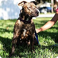 Adopt A Pet :: Alabama - Lake Worth, FL