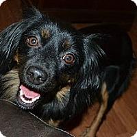 Adopt A Pet :: Dora - Hagerstown, MD