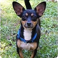 Adopt A Pet :: Sophie - Mocksville, NC