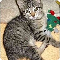 Adopt A Pet :: Shassa - Irvine, CA
