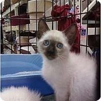 Adopt A Pet :: Baby Sherman - Fort Lauderdale, FL