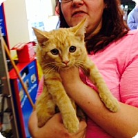 Adopt A Pet :: Waffles - Troy, OH