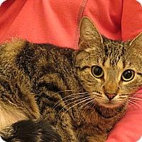 Adopt A Pet :: Mooki - Horsham, PA