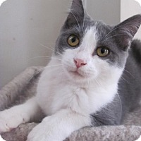 Adopt A Pet :: Debbie - Covington, KY